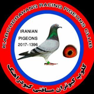کلوپ کبوتران مسافتی کبودرآهنگ