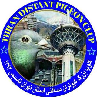 کلوپ کبوتران مسافتی تهران