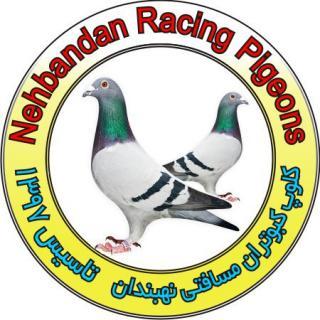 کلوپ کبوتران مسافتی نهبندان