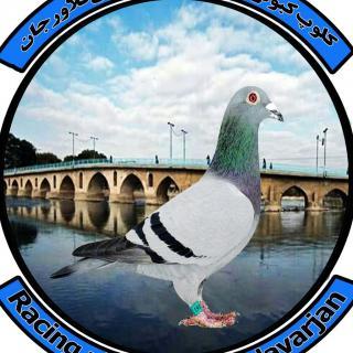 کلوپ کبوتران مسافتی فلاورجان
