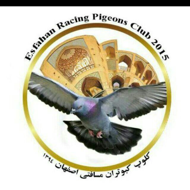 کلوپ کبوتران مسافتی اصفهان