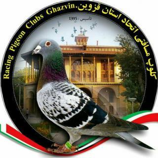کلوپ کبوتران مسافتی قزوین