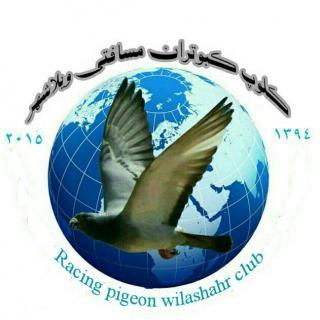 کلوپ کبوتران مسافتی ویلاشهر