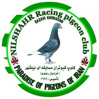 کلوپ کبوتران مسافتی نیلشهر