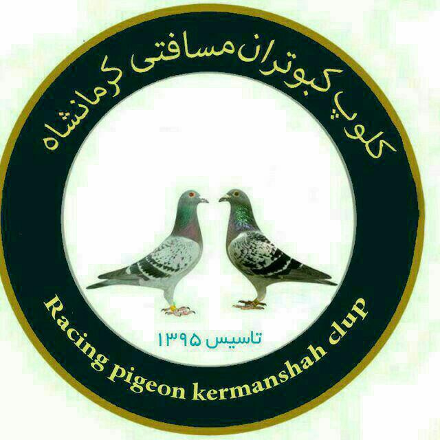 کلوپ کبوتران مسافتی کرمانشاه