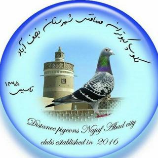 کلوپ کبوتران مسافتی نجف آباد