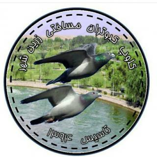 کلوپ کبوتران مسافتی زرینشهر