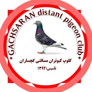 کلوپ مرکزی کبوتران مسافتی گچساران