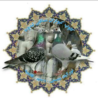 کلوپ کبوتران مسافتی لیدوما
