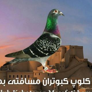 کلوپ کبوتران مسافتی بم