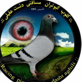 کلوپ کبوتران مسافتی دشت عقیلی