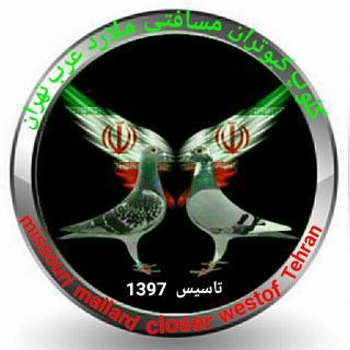 کلوپ کبوتران مسافتی ملارد غرب تهران