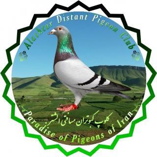 کلوپ کبوتران مسافتی الشتر